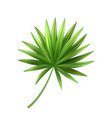 3d tropical palm leaf exotic vacation vector image vector image