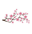 blossom branches vector image