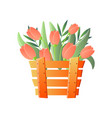 red tulips in wooden box isolated on white vector image vector image