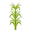sugar cane isolated icon design vector image