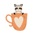 cute raccoon in teacup with heart adorable little vector image