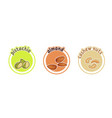 three stickers with different nuts pistachio vector image vector image