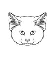 sketch of lynx head portrait of wild cat animal vector image
