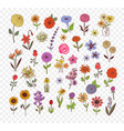 colored doodle sketch flowers vector image