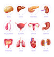 human body internal organs medical flat vector image