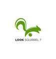look squirrel logo vector image vector image