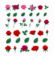 Set of Beautiful Roses Flowers and Leaves vector image