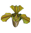 Exotic orchid painted in yellow-green colors vector image vector image
