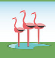 flamingos bird icon vector image vector image
