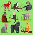 monkeys apes breed rare animal set of vector image vector image