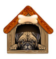 a pug looks out doghouse wall sticker vector image