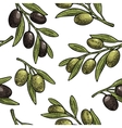 Seamless pattern Olives on branch with leaves vector image