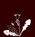 design of hand drawn dandelion flowers on dark vector image