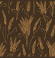 seamless pattern with wheat ears or spikelets on vector image