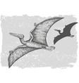 dinosaur pterodactylus grafic hand drawn vector image