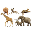 African animals vector image vector image