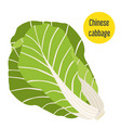 chinese cabbage flat style for markets farms and vector image vector image