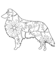 Collie dog colring vector image vector image