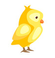 cute easter chicken vector image
