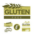 gluten free production emblems set with wheat vector image vector image