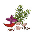 hand drawn set culinary herbs and spices vector image vector image