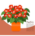 Impatiens plant in pot banner vector image