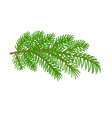 Spruce branch Christmas tree vector image