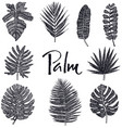 black palm leaves hand drawing isolated object vector image vector image