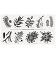 evergreen and conifers plants collection vintage vector image