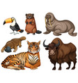 different kinds of wild animals vector image vector image