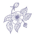 hand drawing peony flower vector image vector image
