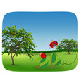 ladybug in nature landscape vector image vector image