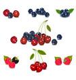 mega set of berries vector image vector image