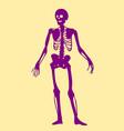 skeleton doodle clipart vector image vector image