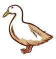 duck hand drawn icon waterbird domestic bird vector image vector image