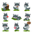 flat set with adorable raccoon in different vector image