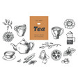 tea collection elements in graphic style hand vector image vector image