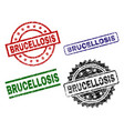 scratched textured brucellosis seal stamps vector image vector image