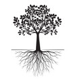 black tree with roots on white background vector image