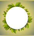 green fresh leaves beautiful background or frame vector image