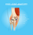 human knee joint anatomy realistic scheme vector image