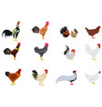 set of chickens on white background vector image