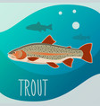 trout fish banner vector image
