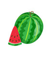 watermelon sweet fruit sliced exotic berry icon vector image vector image
