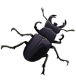 black beetle stag on a white background vector image vector image