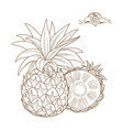 outline hand drawn pineappleflat style thin line vector image vector image