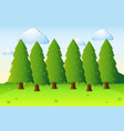 park scene with pine trees and field vector image
