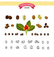 set coffee beans on white background vector image