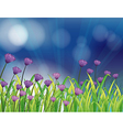 A garden with fresh violet flowers vector image vector image
