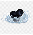 blackberries or blackcurrant in clean water drops vector image